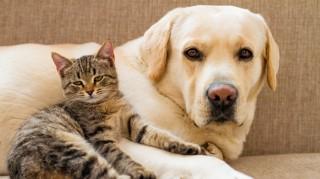 Anjing dan Kucing, Siapa Lebih Pintar?