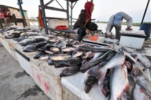 Cuaca Buruk, Harga Ikan Melonjak