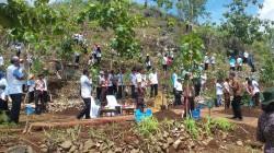 Presiden Jokowi akan Tanam 45 Ribu Pohon di Bukit Karst