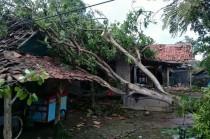 Puluhan Rumah di Indramayu Diterjang Angin Puting Beliung