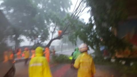 Hujan Deras Landa Jakarta, Sejumlah Pohon Tumbang