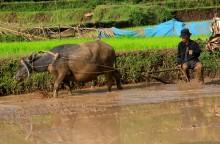 Mengoptimalkan Lahan Rawa via Pertanian