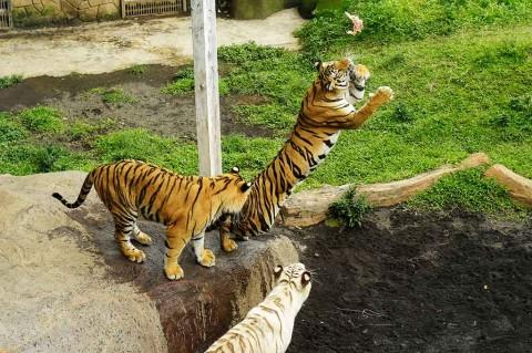Polah Fauna di Batu Secret Zoo