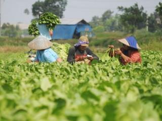 Rendahnya Kesejahteraan Ancam Regenerasi Petani