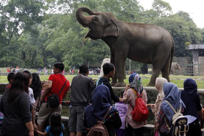 Pengunjung melihat gajah saat berwisata di Taman Margasatwa Ragunan, Jakarta Selatan. Foto: Bary Fathahilah/MI