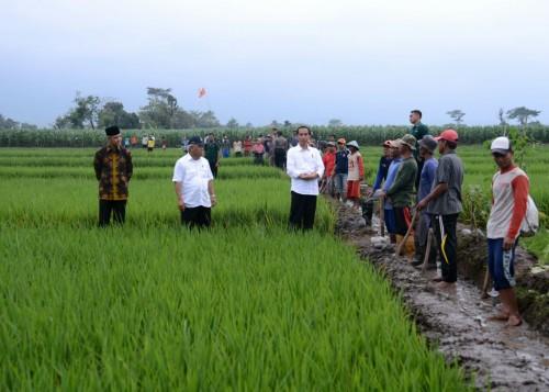 Presiden Jokowi tinjau pembangunan saluran irigasi tersier di