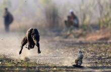 Ratusan Anjing Terabaikan Usai Jalur Balap di Macau Ditutup