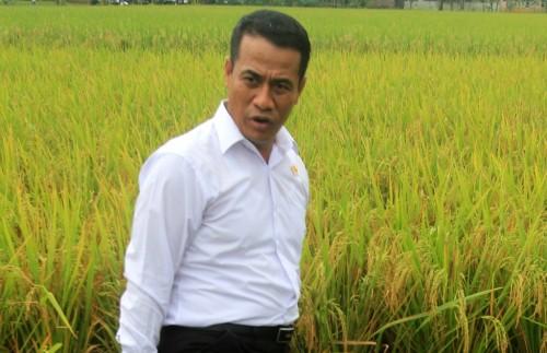 Mentan Andi Amran Sulaiman (Foto:Antara/Dedhez Anggara)