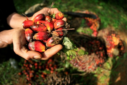 Ilustrasi pekebun sawit. (FOTO: ANTARA/Feri)