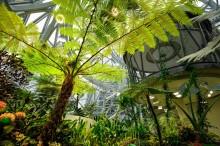 'Hutan Amazon' di Markas Amazon