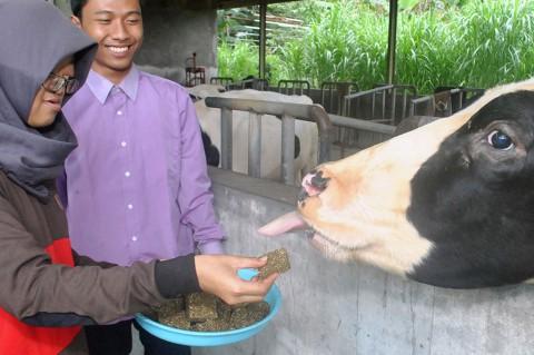 Mahasiswa IPB Ciptakan Wafer Eceng Gondok untuk Pakan Ternak
