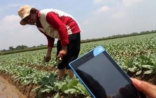 Ilustrasi--digitalisasi dunia pertanian. (Foto: ANTARA/Risky