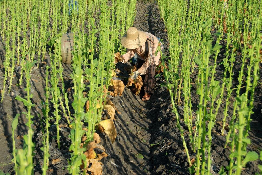 Masyarakat Di Pelosok Papua Harus Diajarkan Ilmu Pertanian