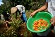 Didik Masyarakat Desa via Pertanian Organik