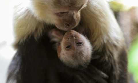 Germany Seeks to Fine Scientists over Monkey Experiments