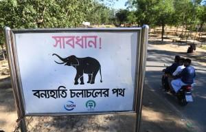 Dua Pengungsi Rohingya Tewas Diinjak Gajah Liar