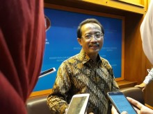 Daun Kelor, Primadona Indonesia yang Digandrungi Warga Rusia