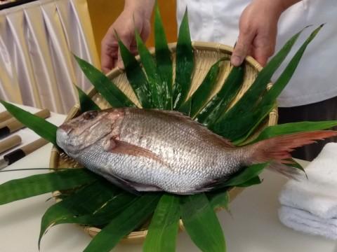 Melihat Ikan Tai, Ikan Kebahagiaan Asal Jepang