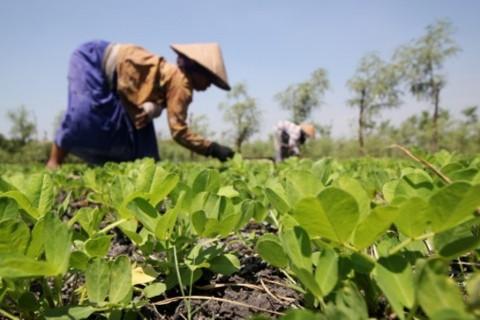 Dua Petani Tewas Tersambar Petir di Karangasem