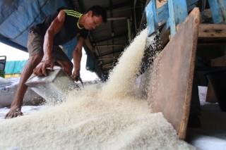 Kualitas Beras Impor Tak Sebaik Beras Lokal di Manado