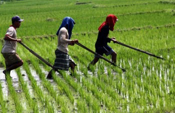 Etos Kerja Luar Biasa Petani Blora dan Rembang
