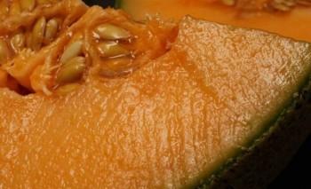 Hikmah di Balik Kontroversi Rockmelon