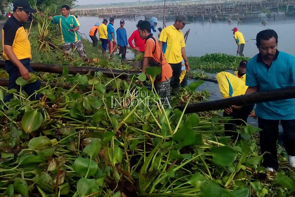 Ratusan ASN Bersihkan Eceng Gondok di Rowo Jombor