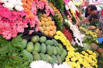 produksi buah lokal