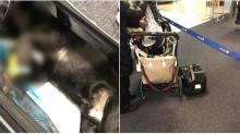 Anjing Mati Ditemukan di Bagasi Kabin United Airlines