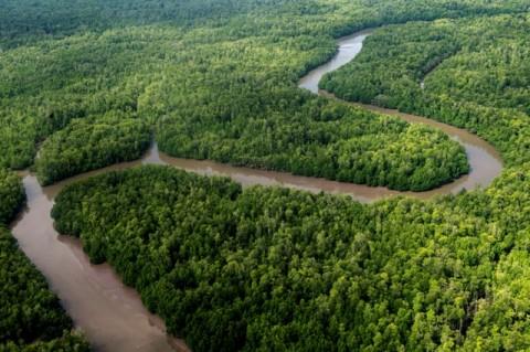 Masyarakat Papua Kesulitan Dapatkan Hutan Adat