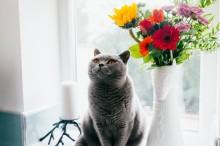 Mengapa Kucing Senang Mengetuk Barang di Sekitarnya?