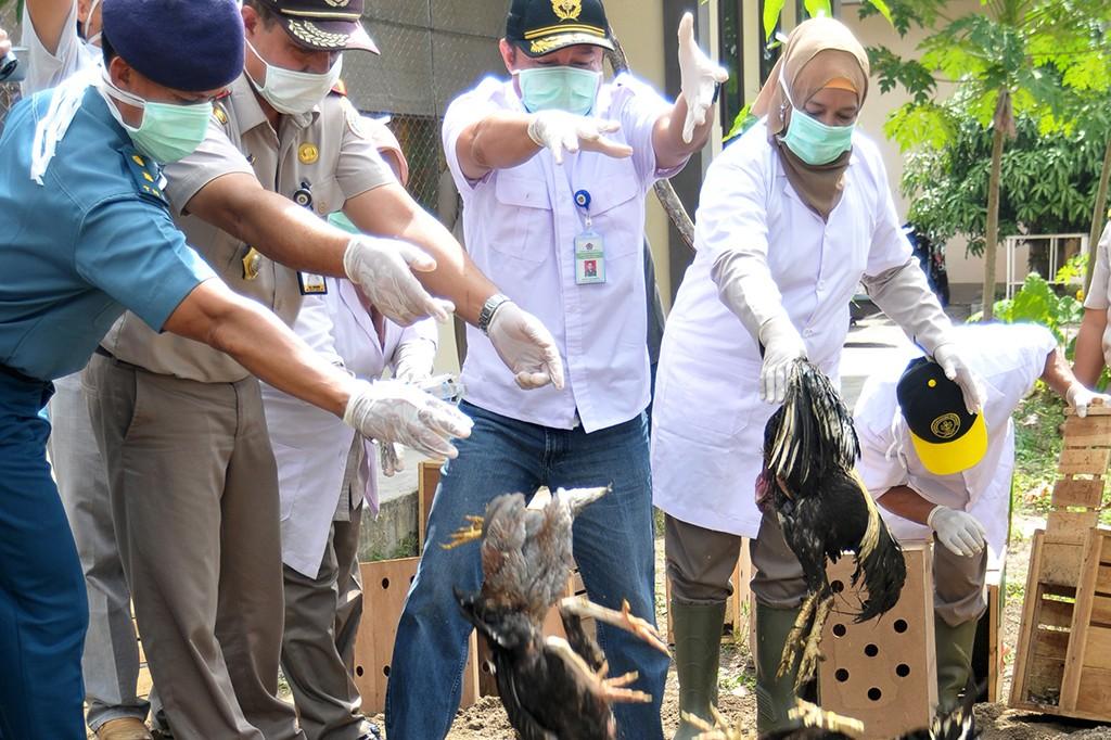 Bea Cukai Aceh Musnahkan Puluhan Ekor Ayam Selundupan