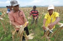 Empat Tantangan Pembangunan Ketenagakerjaan di NTB