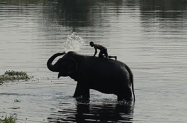 Seorang pria memandikan seekor gajah di Sungai Yamuna, New