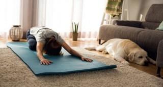 Doga, Tren Yoga Bersama Anjing