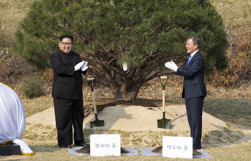 Pohon pinus lambang perdamaian Korea Selatan dan Korea Utara (Foto: EPA).