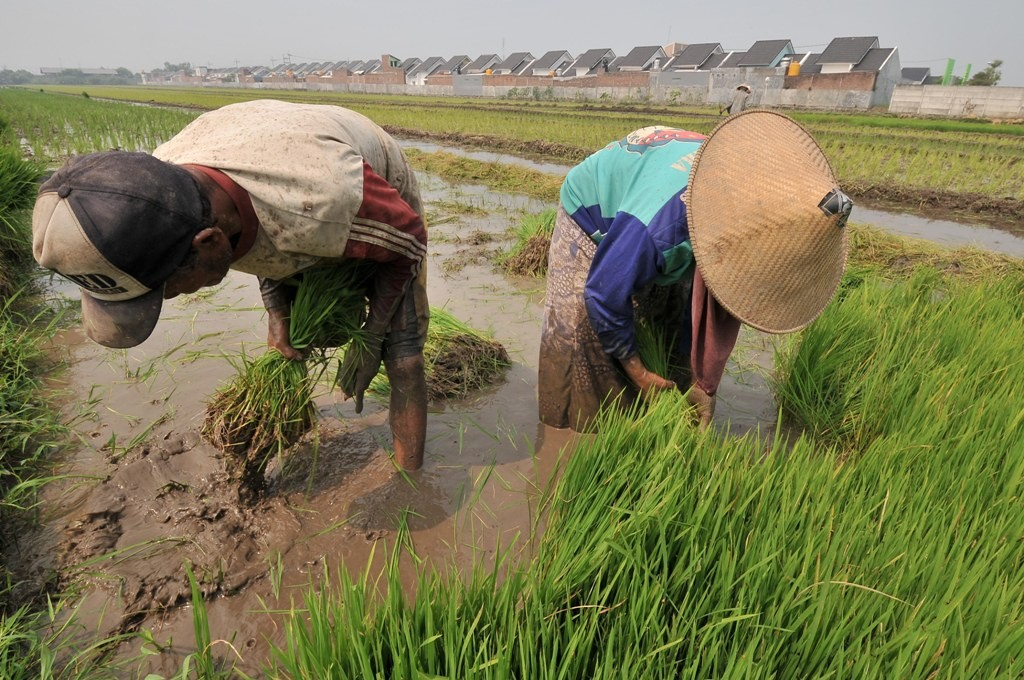 Ilustrasi petani. (Foto: Antara/Hendra).