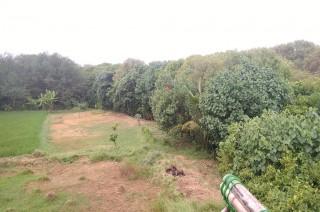 Tiap Tahun, Hutan Mangrove di Indonesia Hilang hampir Seluas Singapura