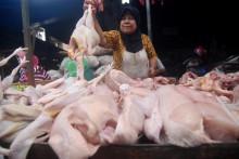 Pelemahan Rupiah Naikkan Harga Daging Ayam Broiler
