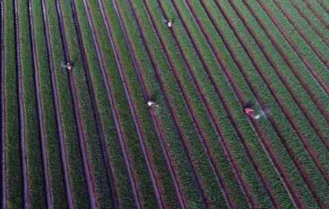 NasDem Dorong Pemerintah Perluas Lahan Pertanian