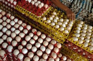 Harga Telur Ayam di Babel Naik