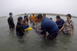Seekor Ikan Paus Mati usai Telan 80 Kantong Plastik