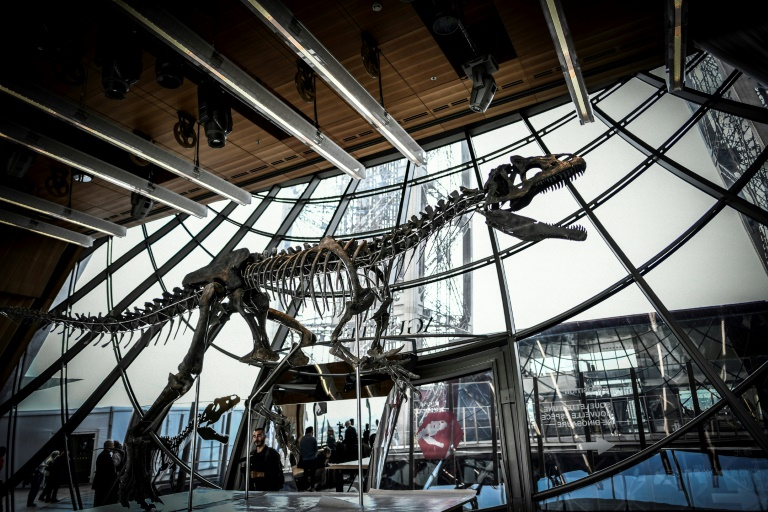 The 150-million-year-old skeleton, which is 70 percent intact, was snapped up by an unnamed French art collector, who promised that the specimen will be lent out to a museum. (Photo:AFP/Stephane de Sakutin)