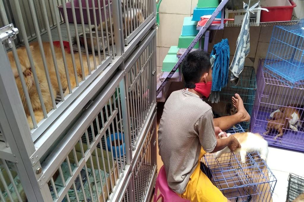 Pekerja tengah mengurusi kucing di sebuah tempat jasa penitipan di Jepara, Selasa, 12 Juni 2018, Medcom.id - Rhobi