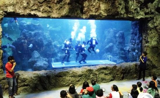 Sambut Libur Lebaran 2018, Seaworld Ancol Siapkan Banyak Acara Seru