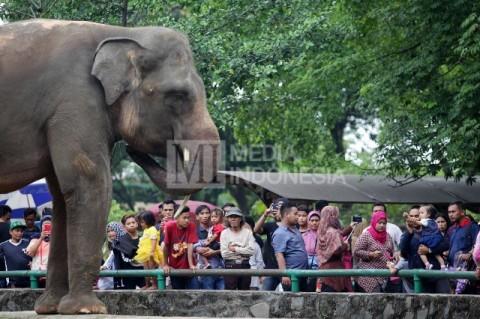 Pengunjung memadati Taman Marga Satwa Ragunan. Foto: MI/Panca