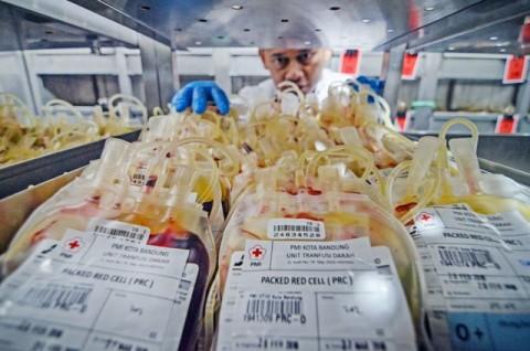 Petugas Palang Merah Indonesia (PMI) menyimpan kantong darah di