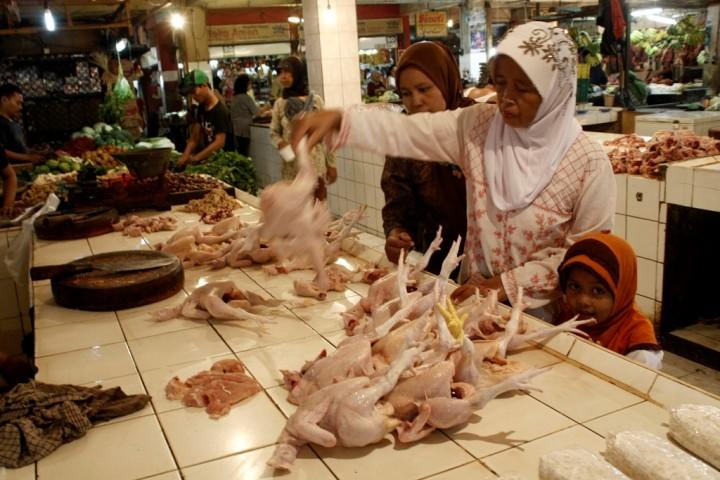 Harga Ayam Potong di Depok Melambung