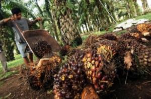 Uni Eropa Pasar Terbuka bagi Minyak Sawit Indonesia