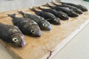 Rajin Konsumsi Ikan Turunkan Risiko Gangguan Jantung